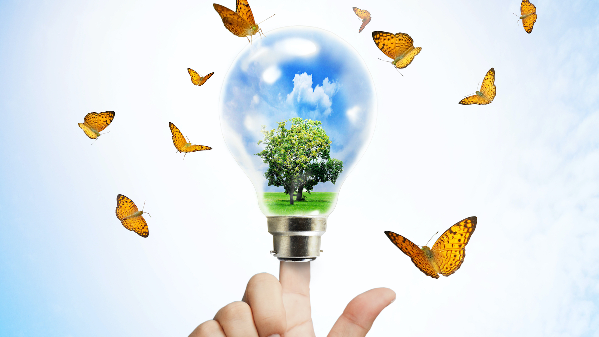 picture of a finger powering a light bulb, with butterflies around it